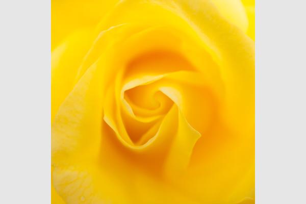 吉田信介 写真展「花の宇宙 ~ Color me beautiful ~」