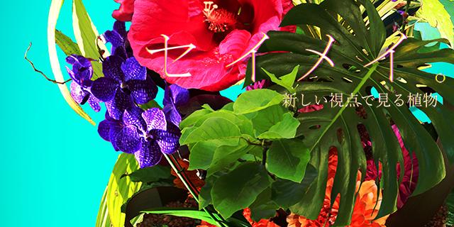 セイメイ。 新しい視点で見る植物
