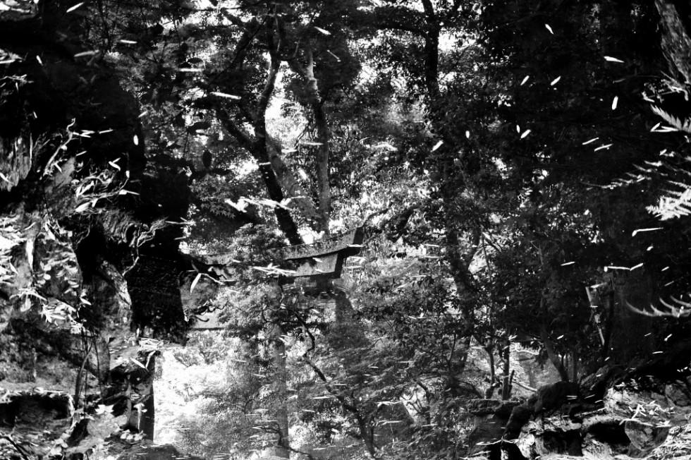 "Hans Jörg Bachmann – PHOTOGRAPHIE ""INSIDE FOREST"""