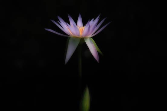 吉田信介 写真展「月の明かり」