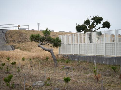 Toshiyuki Nanjo: shelterbelt – straight / sporadic